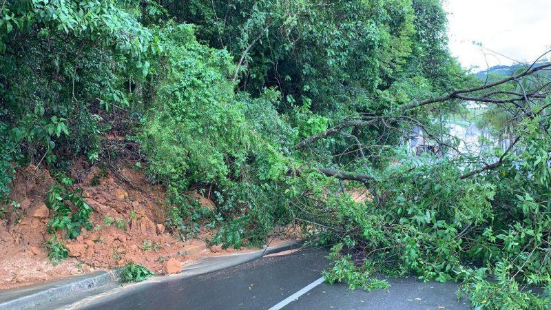 Árvores caídas na pista no Centro de Orleans