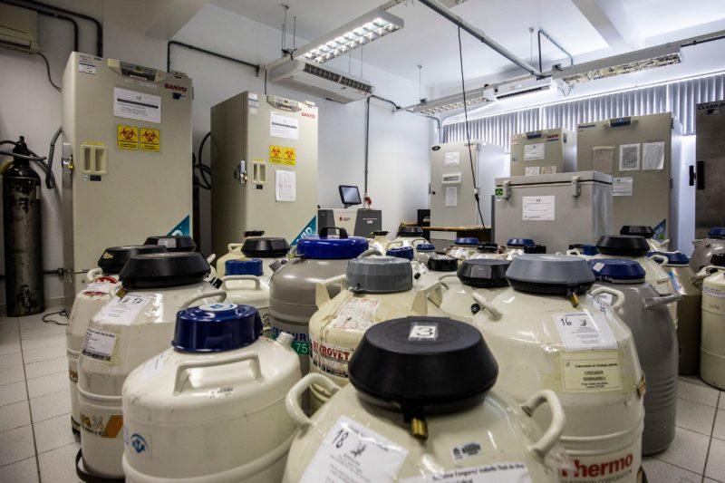 O armazenamento de vacinas dependeria da realocação das amostras biológicas existentes em cada um dos aparelhos. – Foto: Anderson Coelho/ND