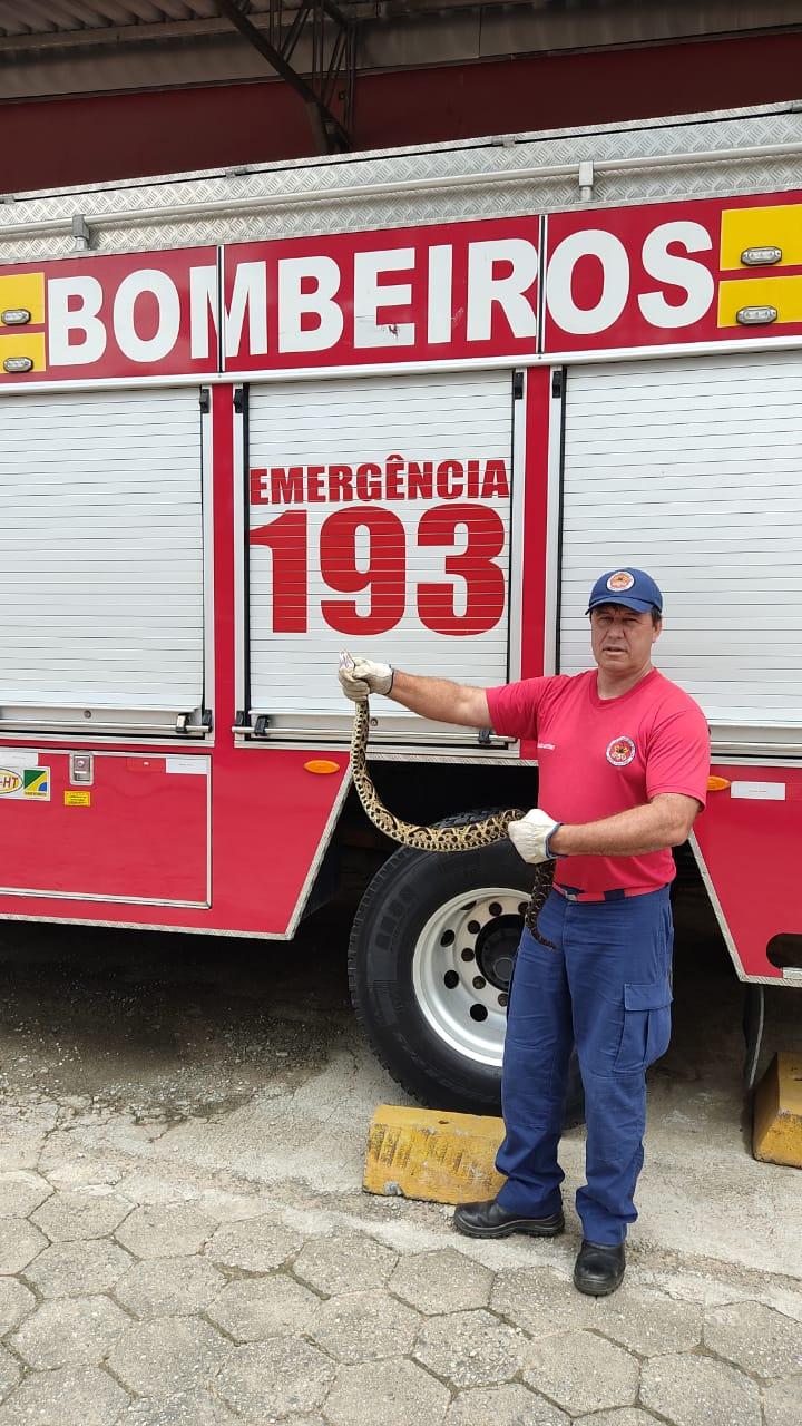Bombeiros capturam cobra jararaca em Brusque - CBM/Divulgação