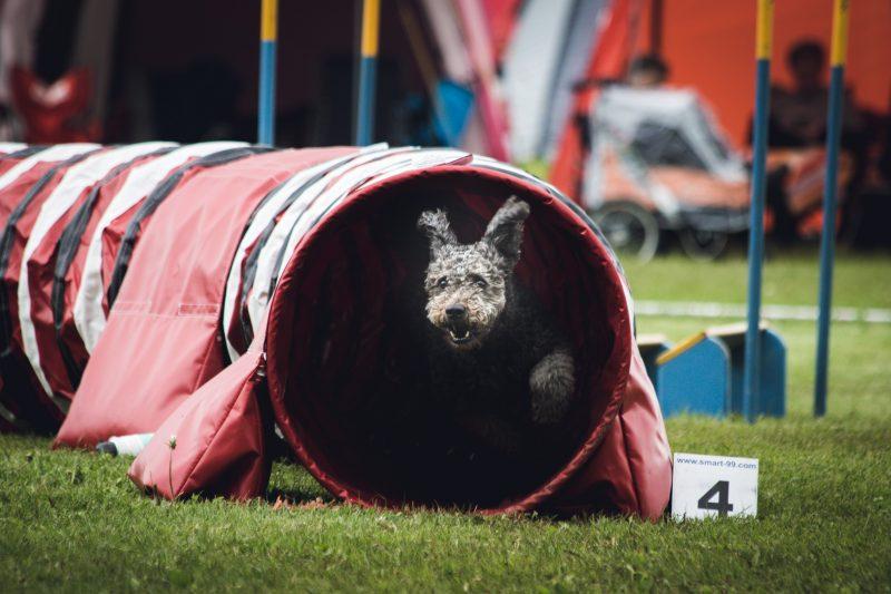 Pet places proporcionam lazer e saúde aos animais de estimação – Foto: Angel Luciano/Unsplash