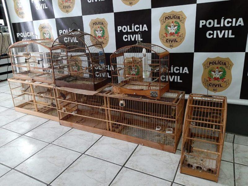 Sete aves silvestres que estavam sendo mantidas no local ilegalmente foram apreendidas. – Foto: Polícia Civil/Divulgação