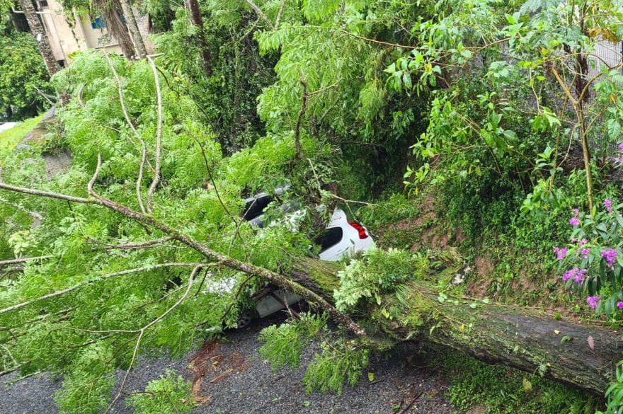 Árvore cai e danifica carros em Blumenau - Divulgação / Redes Sociais