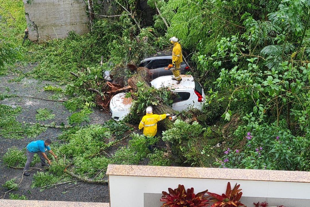Árvore cai e danifica carros em Blumenau - Divulgação / Corpo de Bombeiros de Blumenau