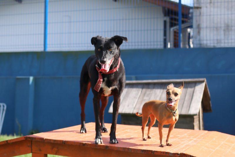 Cadela Lua foi resgatada após ser espancada em Florianópolis