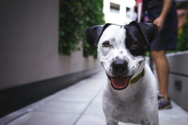 Condomínios com pet places são boas opções para quem tem animais de estimação – Foto: Justin Veenema/Unsplash