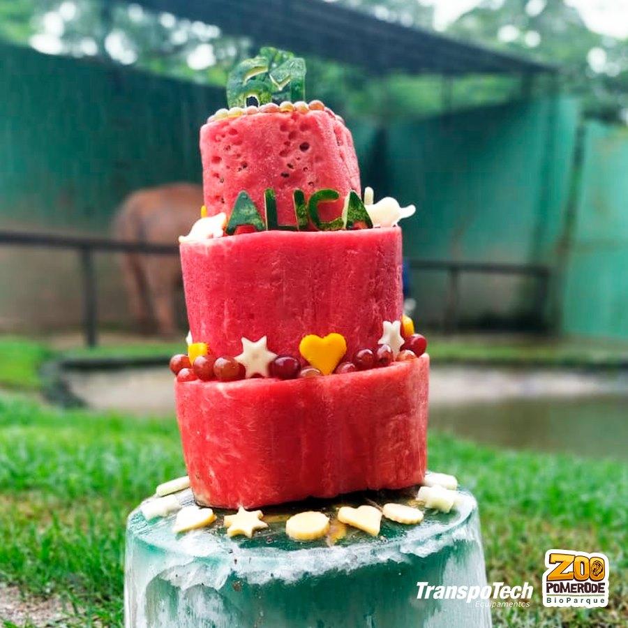 Bolo de frutas foi o prato principal do aniversário da Elefanta Alica - Divulgação/Zoo Pomerode