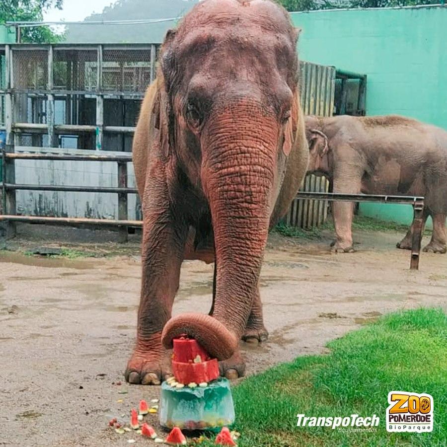 Elefanta Alica completa 61 anos no Zoo Pomerode - Divulgação/Zoo Pomerode