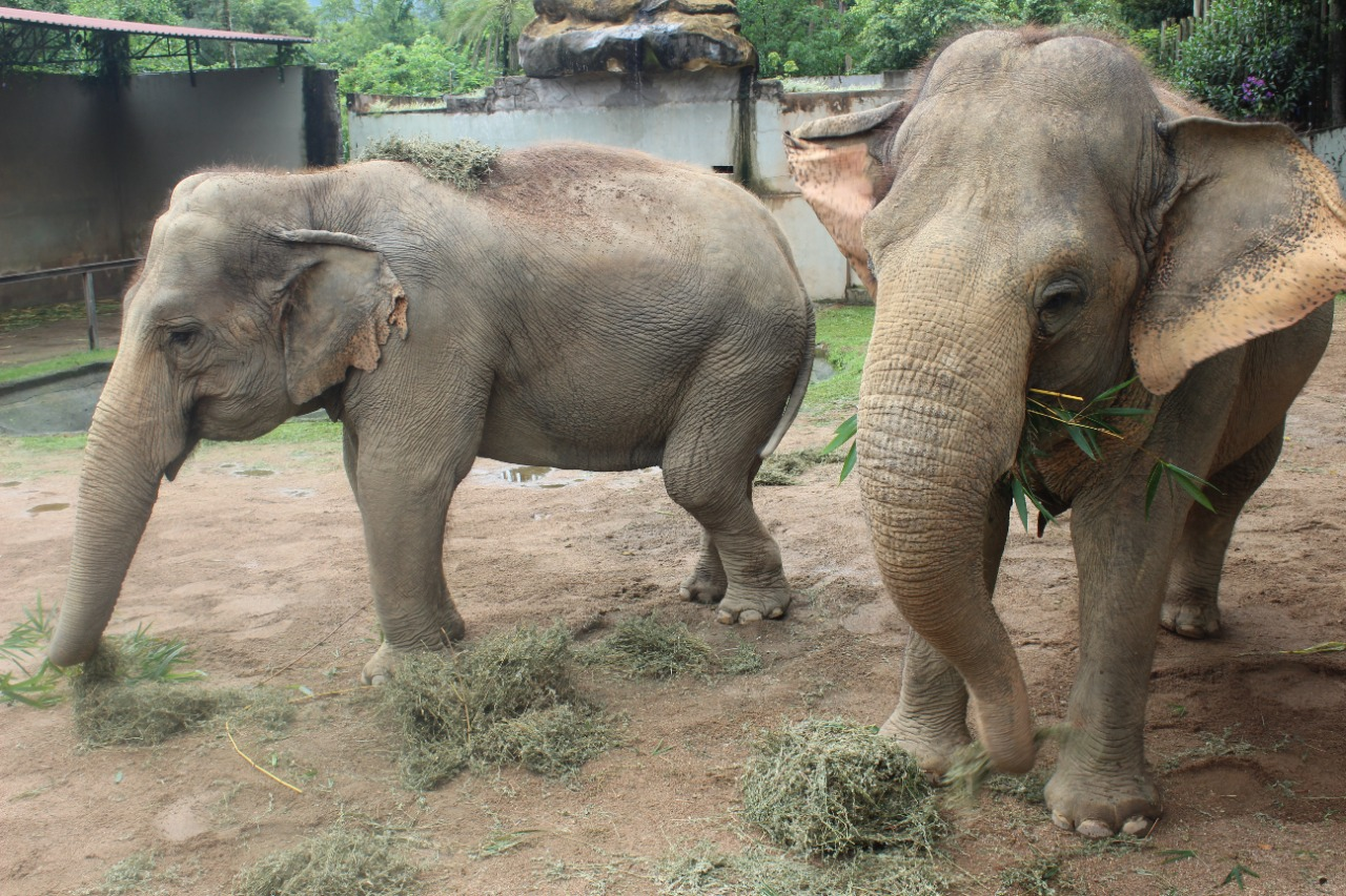A dupla Kenia e Alica é muito querida e faz a alegria de visitantes e trabalhadores do Zoo Pomerode - Divulgação/Zoo Pomerode