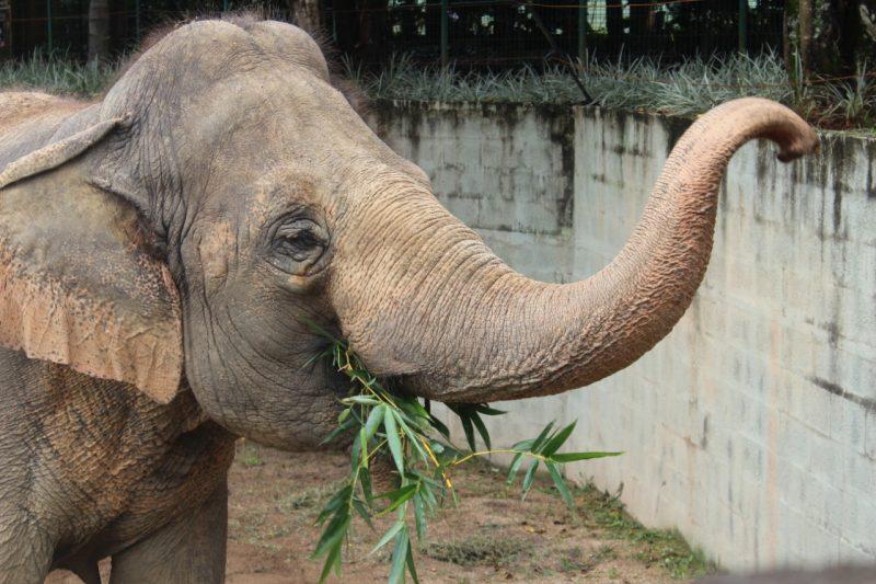 Comida fresquinha vai bem cinco vezes por dia! – Foto: Divulgação/Zoo Pomerode