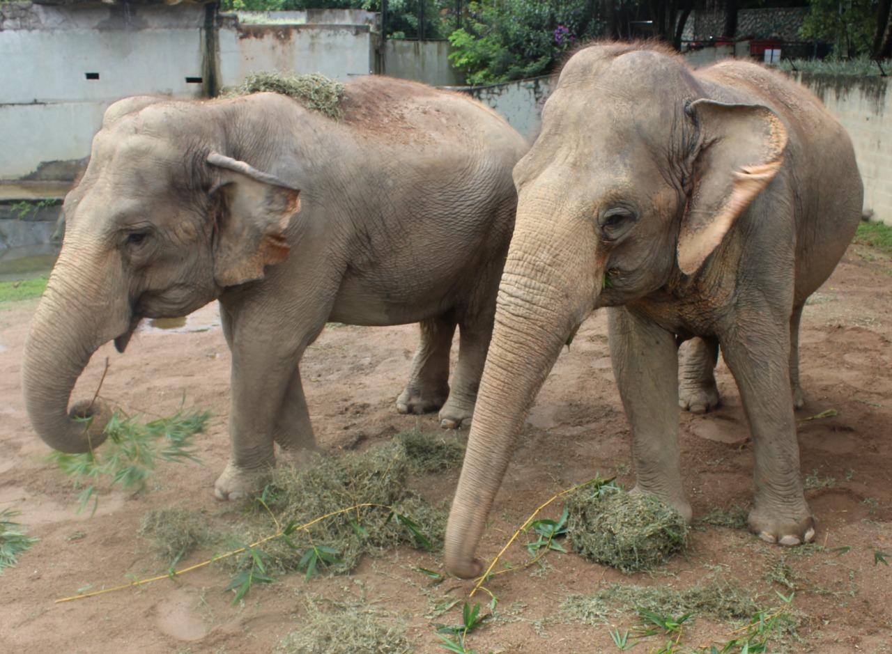 Kenia e Alica foam resgatadas de um circo e vivem no zoológico de Pomerode desde 2006 - Divulgação/Zoo Pomerode