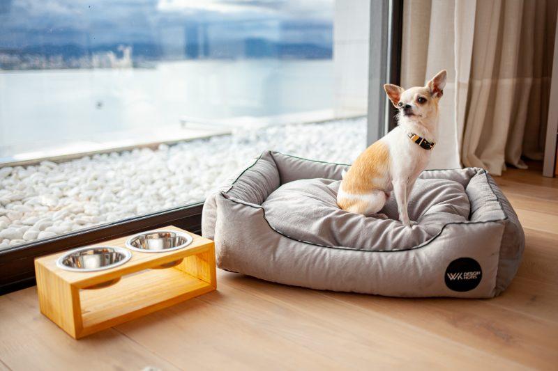 Seu amigão também tem espaço, e com vista privilegiada! – Foto: GabiVerfe Fotografia – www.gabiv/ND