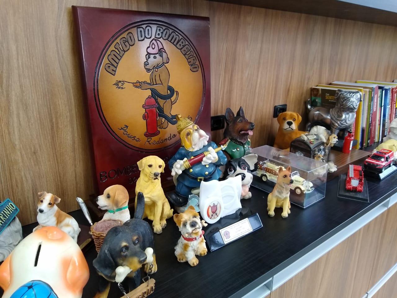 Para Parizotto, os cachorros em miniatura transmitem inspiração para continuar atuando com a cinotecnia, treinamento com cães - Carolina Debiasi/ND