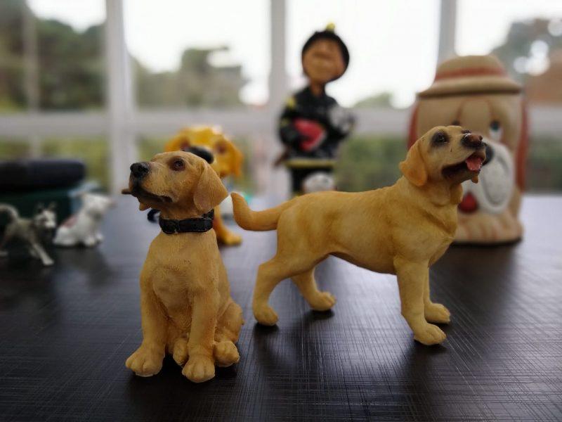 Dois cães em miniaturas comprados em uma loja de utilitários em Florianópolis em 2006 foram o ponta pé inicial para a coleção – Foto: Carolina Debiasi/ND