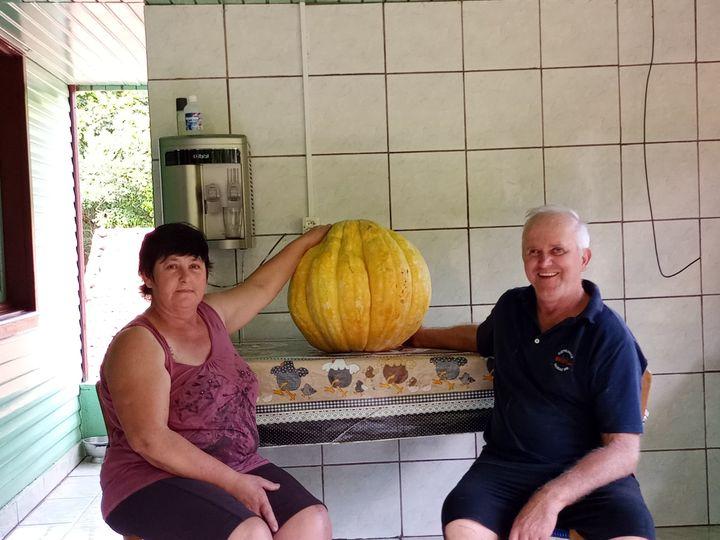 Casal Horst, moradores do interior de Itá, no Oeste de SC, colhem moranga gigante de 29 kg – Foto: Arquivo pessoal/Divulgação