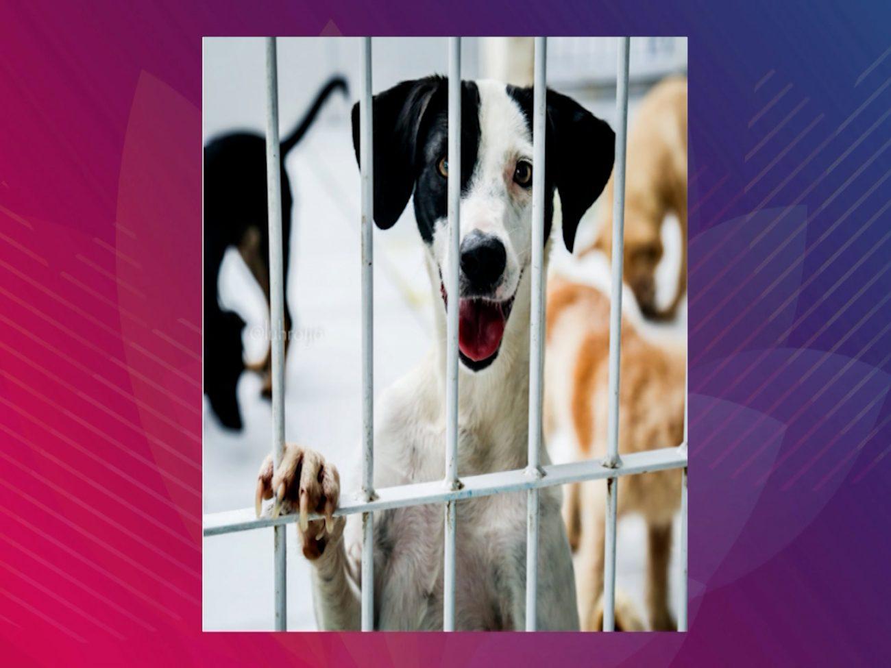 São quase 70 animais que estarão disponíveis para adoção em Navegantes - DABA/Divulgação