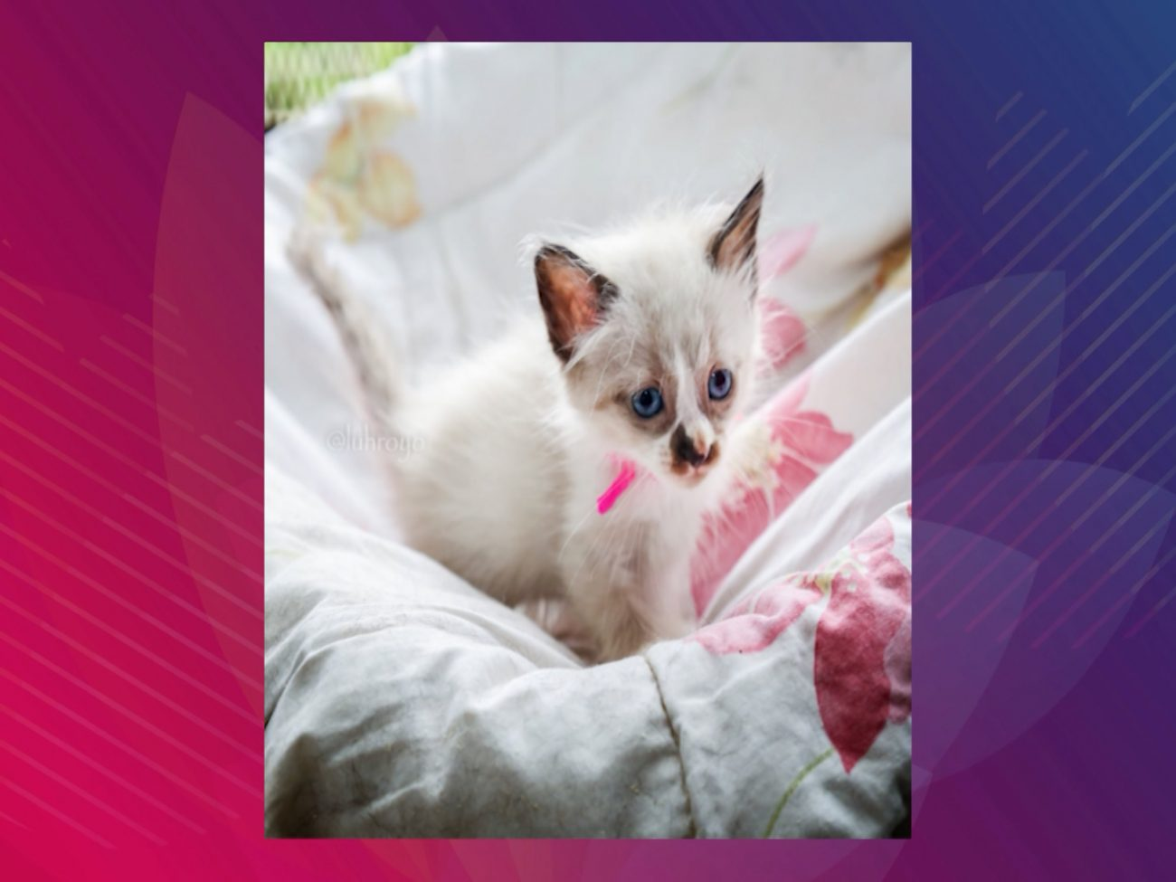 Cerca de 70 animais estarão disponíveis para adoção no sábado, em Navegantes - DABA/Divulgação