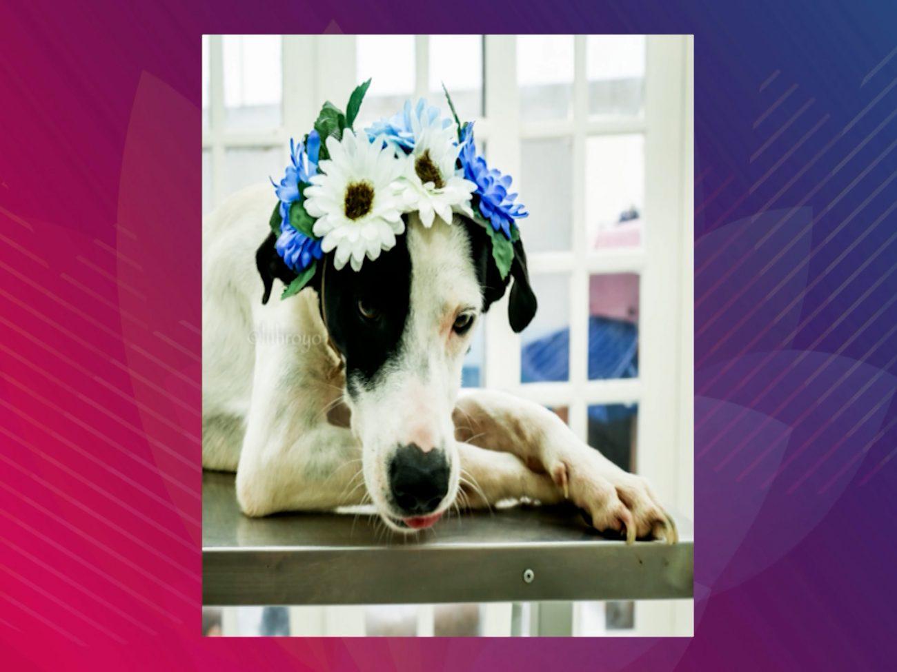 Conheça os animais que estarão disponíveis para adoção em Navegantes - DABA/Divulgação