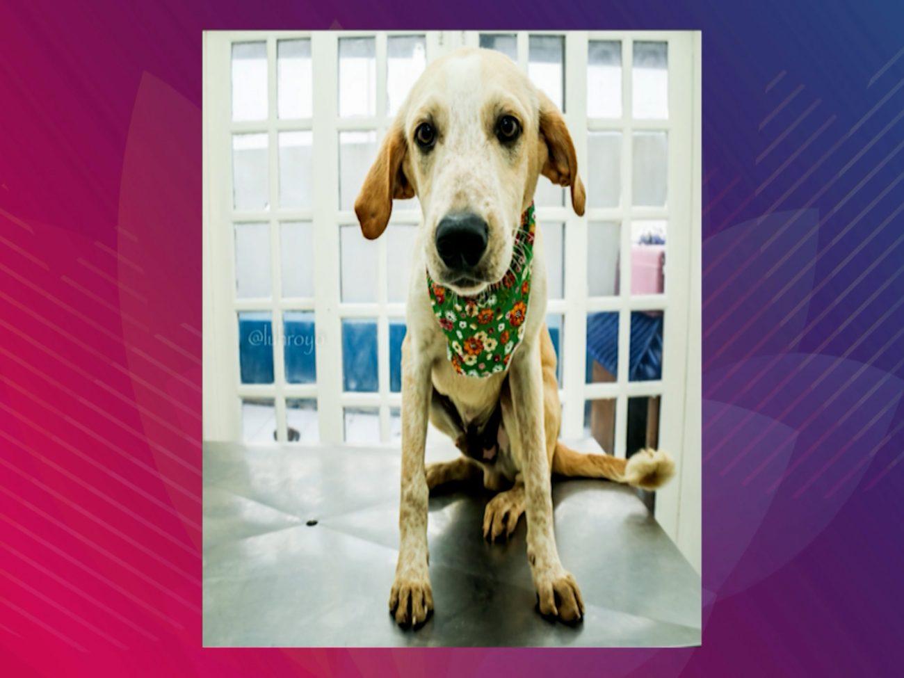 Cães e gatos estarão disponíveis para adoção - DABA/Divulgação