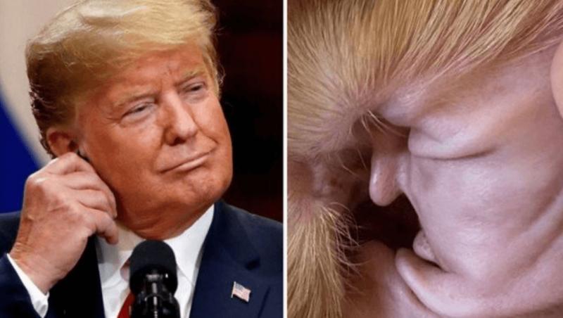 Trump original e sua versão ouvido de cachorro. Só na internet mesmo. – Foto: Reprodução Reddit