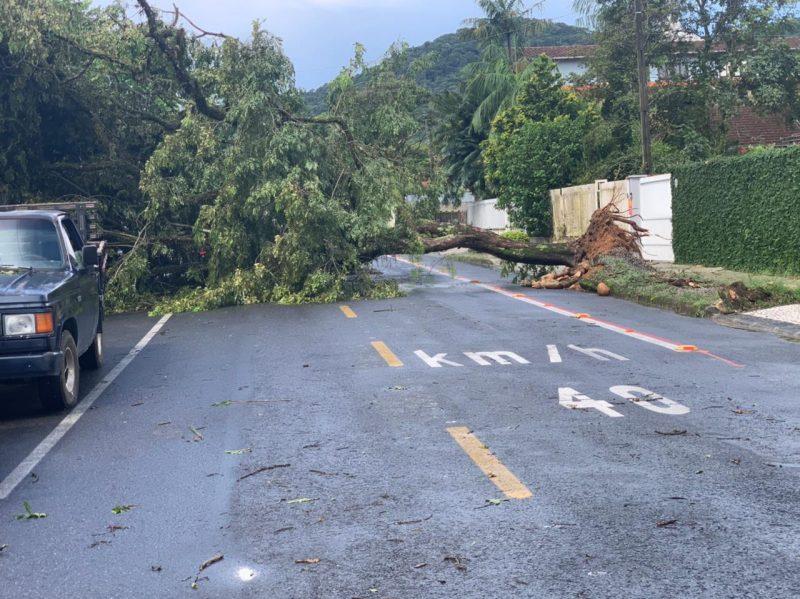 Rua ficou completamente obstruída com a queda da árvore – Foto: Alfa Stofelli/NDTV Joinville