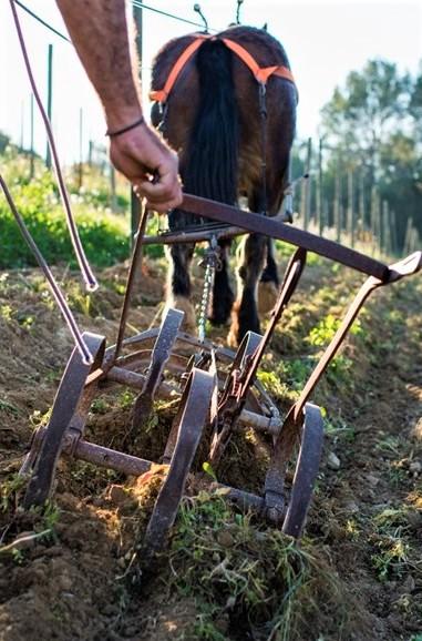 Vinhedo biodinâmico da vinícola catalã Raventós i Blanc, icônico produtor espanhol – Foto: Divulgação