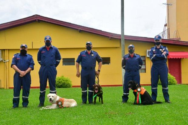 Orion (caramelo), Léia (marrom, no meio) e Sasuke foram aprovados e irão compor a equipe – Foto: Divulgação/CBMSC/ND