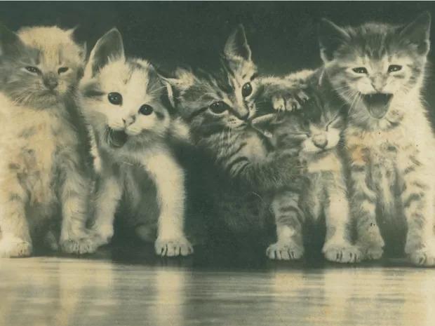 Solteira e sem filhos, ela se dedicava também ao cuidado dos animais. Chegou a ter mais de 60 gatos ao longo da vida - Arquivo Histórico/FCBlu