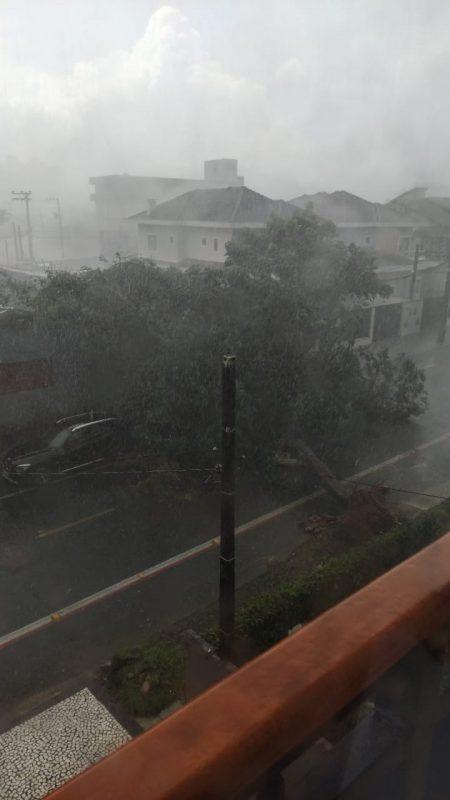 Árvore caiu obstruindo a rua José do Patrocínio, logo no começo da rua, próximo à rua Dona Francisca, em JOinville – Foto: Internet/Divulgação ND