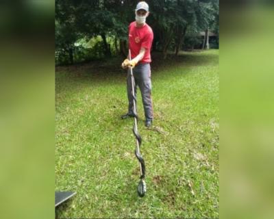 Cobra não venenosa é capturada pelos bombeiros no interior de Anchieta – Foto: Corpo de Bombeiros/Divulgação/ND