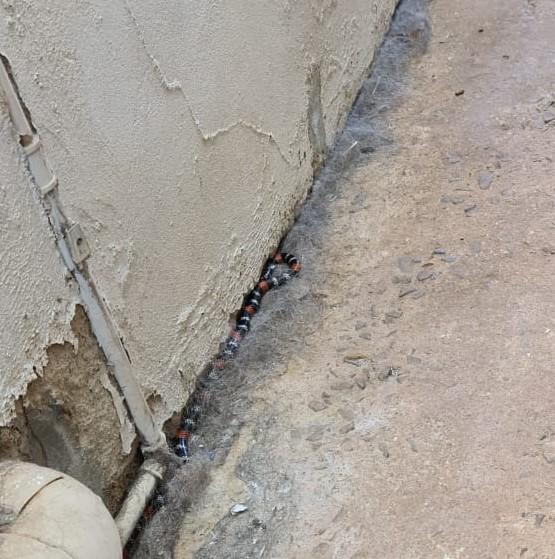 A cobra estava na área externa da casa. - Corpo de Bombeiros/Divulgação/ND