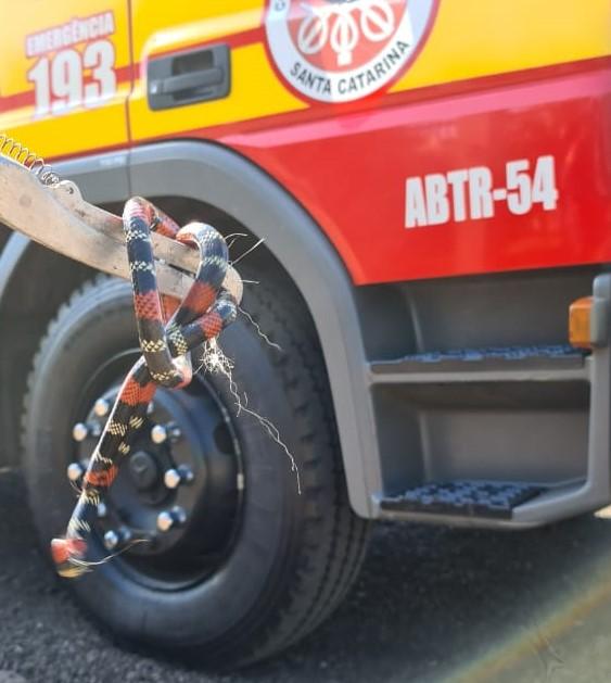 Os bombeiros capturaram a cobra e devolveram ao habitat natural. - Corpo de Bombeiros/Divulgação/ND