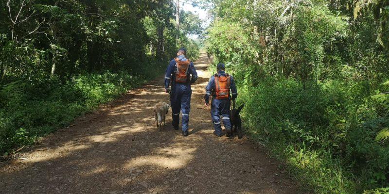 Dois binômios do Corpo de Bombeiros contribuíram com as buscas. – Foto: Corpo de Bombeiros/Divulgação/ND