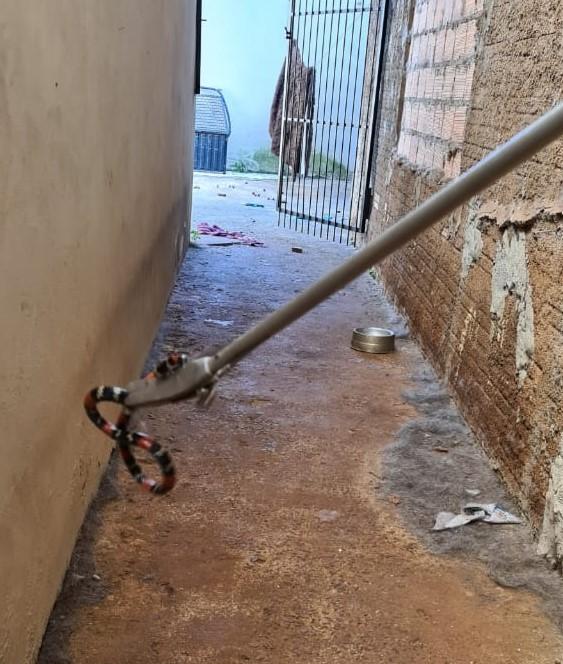 A serpente estava no local em que fica o animal doméstico da família. - Corpo de Bombeiros/Divulgação/ND
