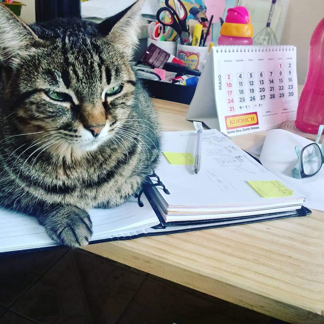 O nome dela é Feia, mas de feia ela não tem nada! Olha esse registro da tutora Quésia Carriel Pedroso - Arquivo pessoal/ND