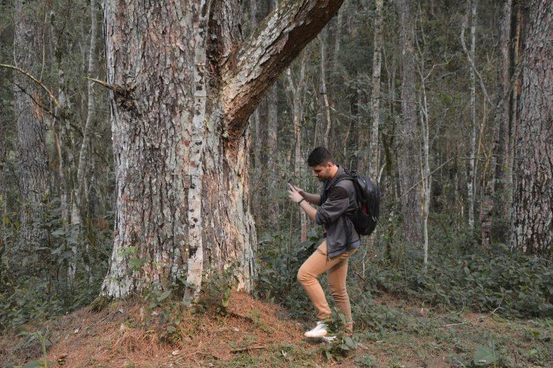 Floresta Nacional de Chapecó. – Foto: FNC/Divulgação/ND