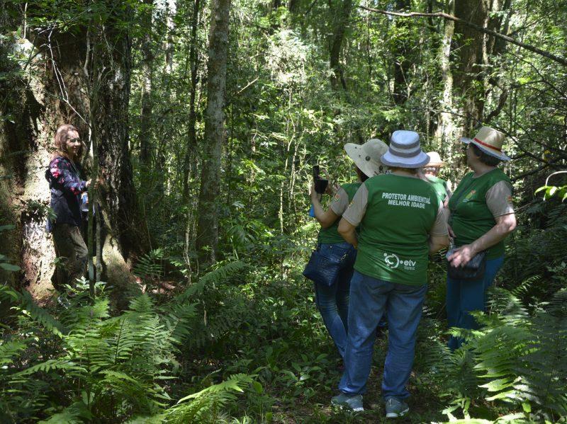 Flores Nacional de Chapecó é uma das únicas que receberá concessão. – Foto: Floresta Nacional de Chapecó/Divulgação/ND