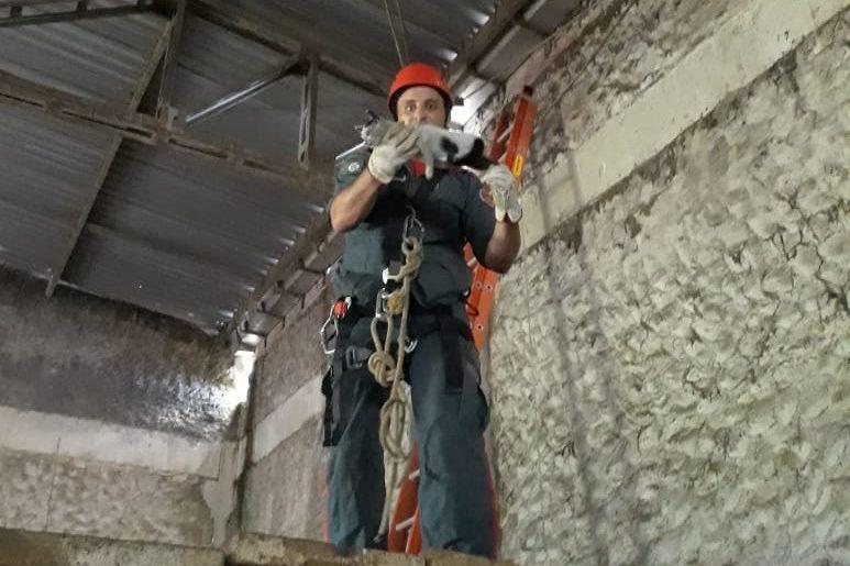 Gato é resgatado em telhado de galpão com mais de 15 metros de altura – Foto: Divulgação/OBM/ND
