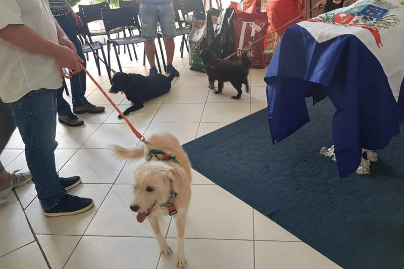 La despedida: los perros de Ana Rita fueron llevados al velorio - Foto: Albertina Camilo / ND Disclosure