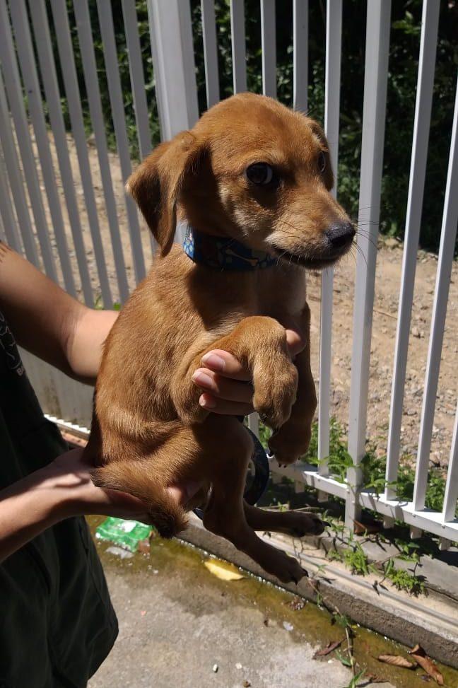 Jovem é preso em flagrante por maus tratos aos animais em Blumenau - Divulgação/Polícia Civil