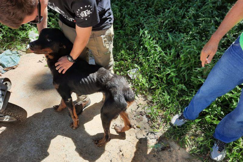 Jovem é preso em flagrante por maus tratos aos animais em Blumenau – Foto: Divulgação/Polícia Civil