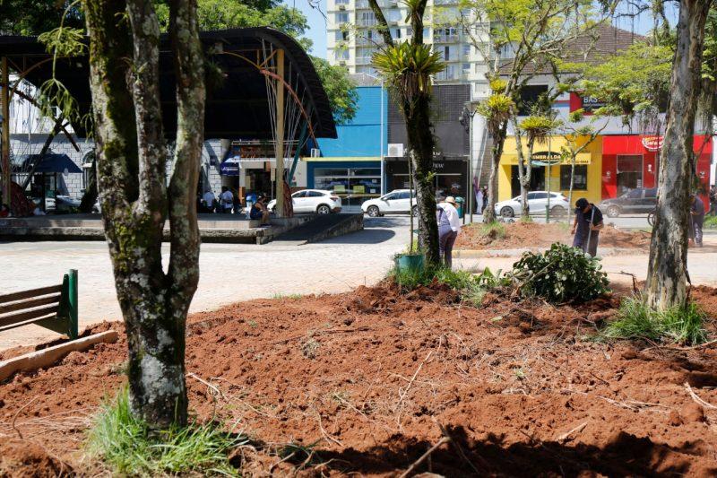 Mutirão de embelezamento já começou em alguns locais, como na praça Nereu Ramos – Foto: Prefeitura de Joinville/ND