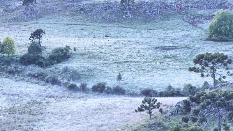 Geada cobriu a paisagem no amanhecer deste domingo no Vale dos Caminhos da Neve – Foto: Mycchel Legnaghi/São Joaquim Online
