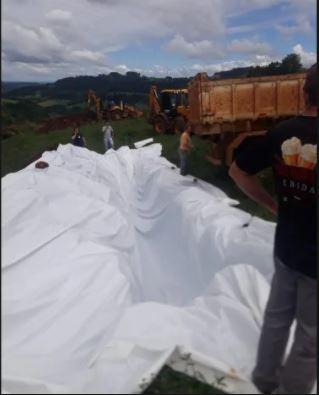 Os 540 porcos foram envolvidos por uma manta plástica para evitar a contaminação no solo - Reprodução/Divulgação/ND