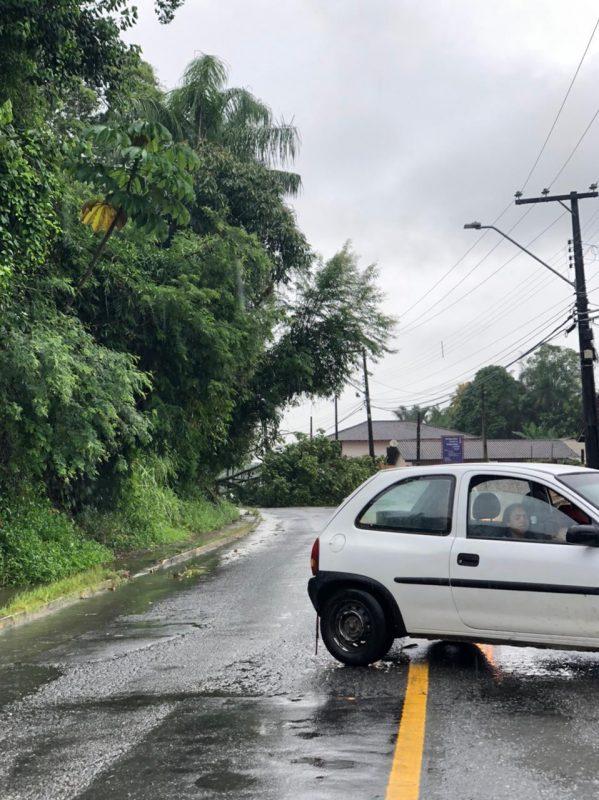 No Rio Bonito, também na zona Norte de Joinville, uma árvore caiu sobre a principal via da localidade, interrompendo o trânsito – Foto: Arquivo pessoal/ND