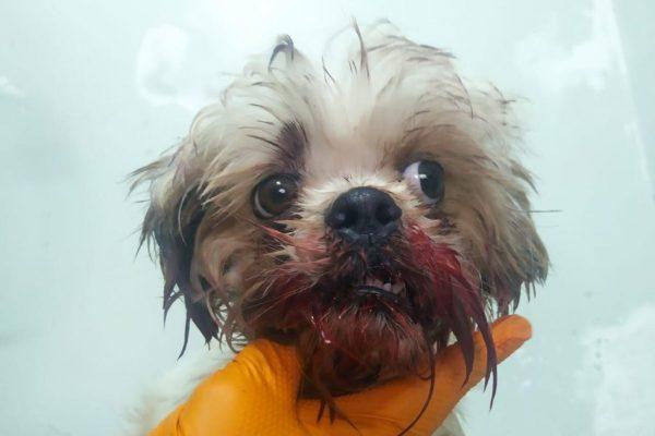 Cãozinho Thor ganhou perfil em rede social para tratamento – Foto: Reprodução