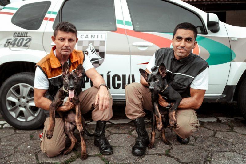 Ozzy e Fall estão em treinamento na PM de Blumenau – Foto: Giovanni Silva/PM/Divulgação/ND