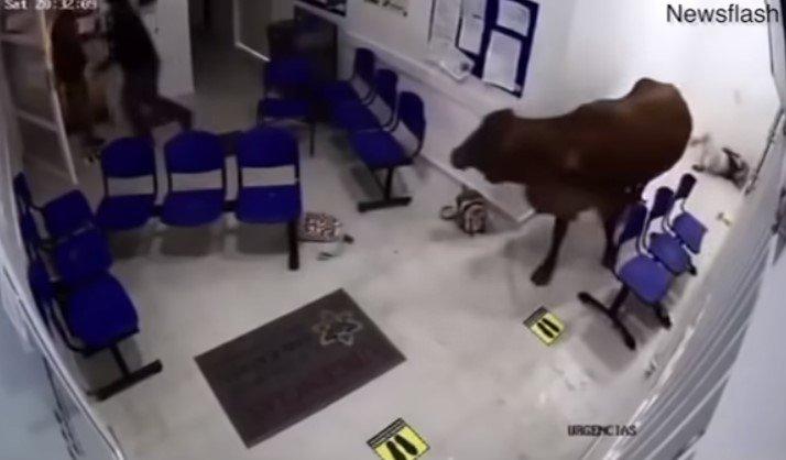 Onde uma mulher foi atingida por cabeçadas do animal - Reprodução/Youtube/ND