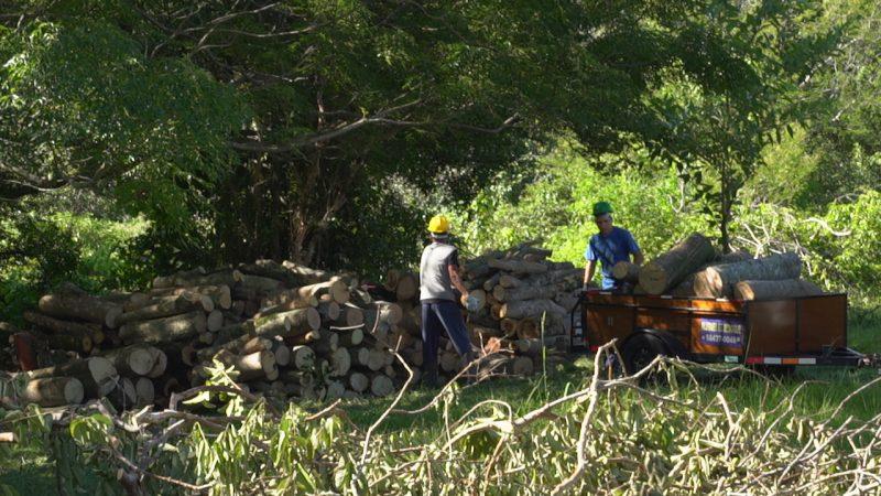 Vegetação suprimida vai dar espaço a nova estação de tratamento de esgoto da Casan no João Paulo