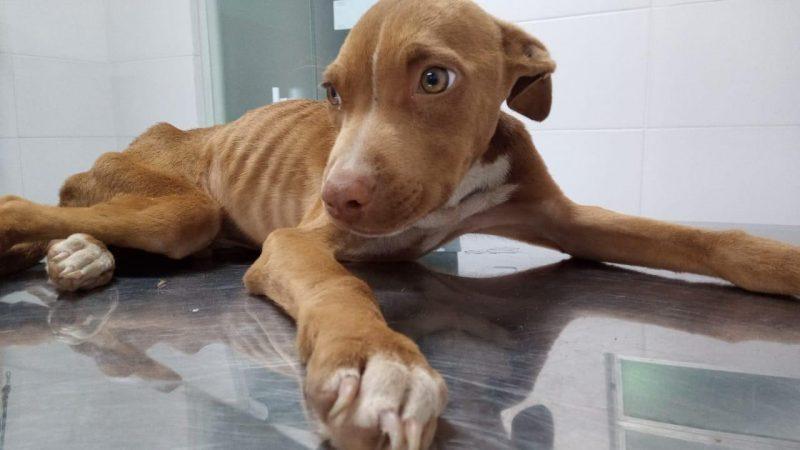 Pode virar lei em Chapecó agressor pagar tratamento de animal agredido – Foto: Divulgação/ND