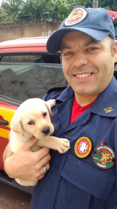 Alerta de fofura: Bob é o novo filhote em treinamento dos Bombeiros de Itapema – Foto: CBMSC/Divulgação